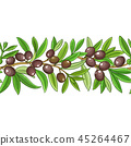 olive plant vector 45264467