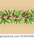 olive leaf plant 45264496
