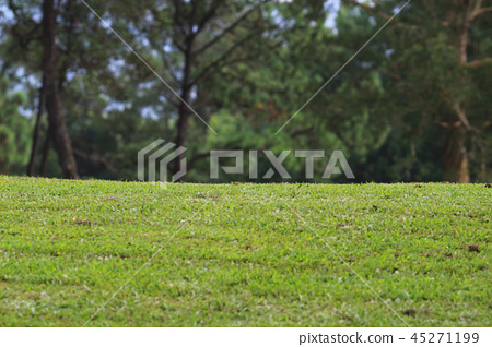 Perfect grass golf course field at hk 45271199