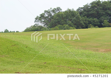 Perfect grass golf course field at hk 45271201