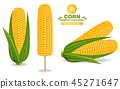 corn vector maize 45271647