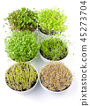 Six microgreens in white bowls, vertical 45273704
