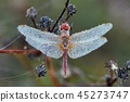 Dragonfly with water drops all over 45273747