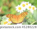 蝴蝶 戶外 大理石貝母 45280228
