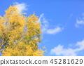 레볼루션 골드 잎 단풍 45281629
