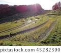 Evening landscape of rice terraces 45282390