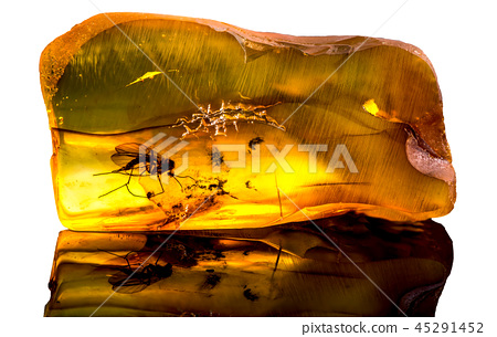 baltic amber with frozen in this piece a mosquito 45291452