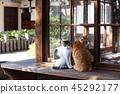 大江神社貓 45292177