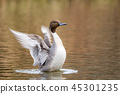 wing, aquatic, bird 45301235
