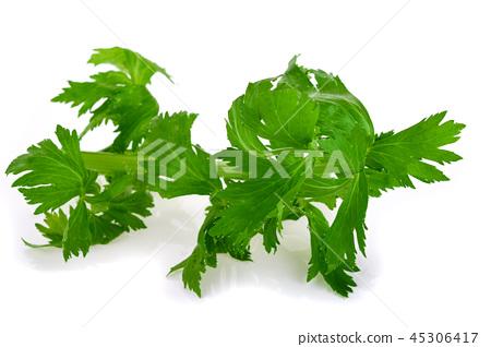 Celery isolated on white background 45306417