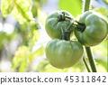 番茄 西紅柿 蔬菜 45311842