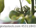 番茄 西紅柿 蔬菜 45311843