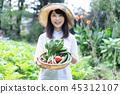 農業蔬菜生產者收穫農民 45312107