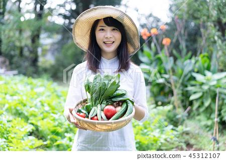 농업 야채 생산자 수확 농가 45312107