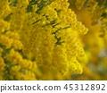 ดอกไม้ฤดูใบไม้ผลิ,ฤดูใบไม้ผลิ,ดอกไม้ 45312892