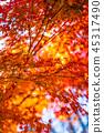 햇빛의 가을 단풍 45317490