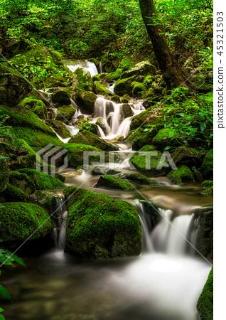 lush mossy creek side 45321503