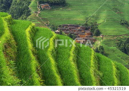 Longi rice terrace 45321519