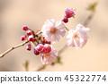 벚꽃 45322774