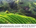 녹색, 마을, 농장 45323207