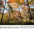 瀑布 楓樹 紅楓 45323339
