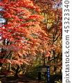 瀑布 楓樹 紅楓 45323340