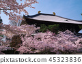 벚꽃의 풍경 45323836