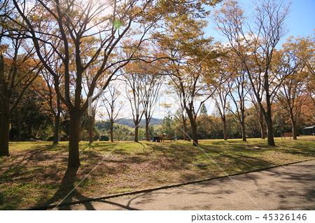 Autumn park 45326146