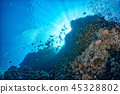 coral, underwater, fish 45328802