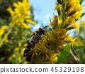 虫子 漏洞 昆虫 45329198