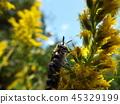 蟲子 漏洞 昆蟲 45329199