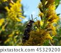 虫子 漏洞 昆虫 45329200