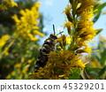 蟲子 漏洞 昆蟲 45329201