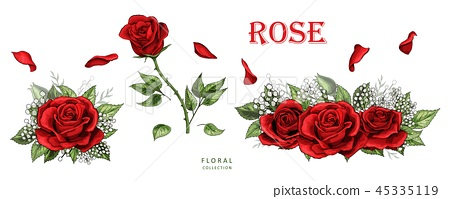 Red roses hand drawn color set. Rose flowers isolated on white background 45335119