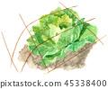 양배추, 야채, 채소 45338400