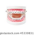牙齒 模型 模特 45339831