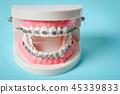 鏡子 牙齒 模型 45339833