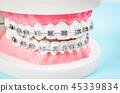 牙齒 模型 模特 45339834