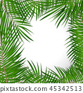 Frame with Palm Leaf Vector Background Isolated Illustration 45342513