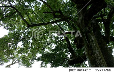 豐富的綠樹自然豐富的綠樹自然 45344266