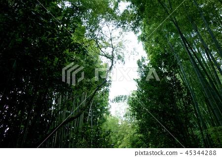 일본 교토 녹색 대나무 덤불 죽림 Japan Kyoto green bamboo forest 45344288
