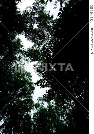 하늘을 올려다 보는 어두운 풍경 숲 Dark landscape looking up at the sky 45344289
