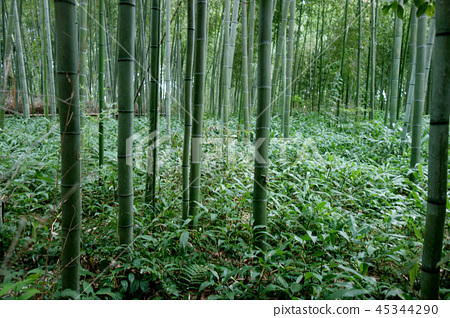 Japan Kyoto green bamboo fence Japan Kyoto green bamboo forest 45344290