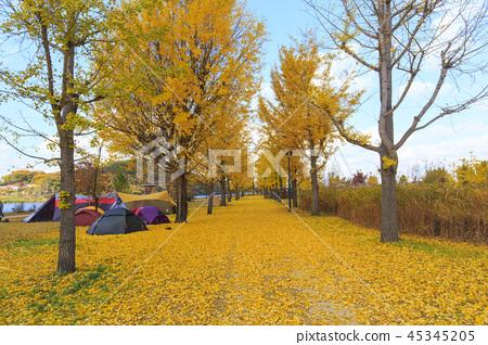 가을 캠핑 45345205