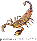 Exotic scorpion wild insect in a watercolor style isolated. Full name of the insect: scorpion. 45352710