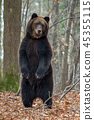 animal, forest, wildlife 45355115