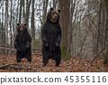animal, forest, wildlife 45355116
