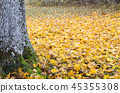 Mossy tree trunk and maple leaves 45355308