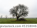 Wide lone tree by fall season 45358046
