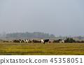 Herd of grazing cattle by fall season 45358051